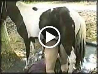 Free Bestiality Porn Video