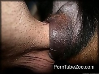 POV Blowjob zoo